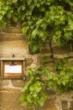 Drewniana deska z zawiadomieniem obramiającym dzikim winem z niedojrzałymi winogronami zdjęcia royalty free