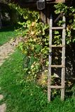 Drewniana drabina gronowym winogradem zdjęcia stock