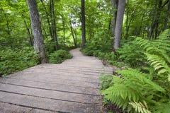 Drewniana droga przemian przez rodzimego Minnesotan lasu. Obraz Stock
