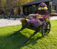 Drewniana fura z kwiatami Fotografia Stock