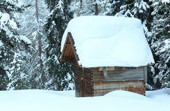 Drewniana jata w zimy jodły lesie Zdjęcie Stock