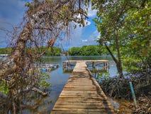 Drewniana jetty łódź i bagienny namorzynowy tło zdjęcie stock