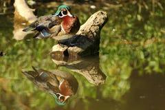 Drewniana kaczka Fotografia Stock