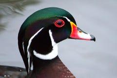 Drewniana kaczka w profilu Fotografia Royalty Free