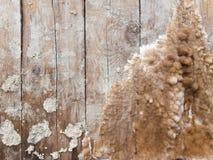 Drewniana koc rywalizujący zbutwiali grzyby Zdjęcia Royalty Free