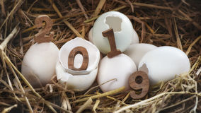 Drewniana liczba 2019 na eggshell Zdjęcia Stock