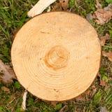 Drewniana okrąg tekstura Zdjęcia Stock