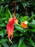 Drewniana orchidea Zdjęcia Stock