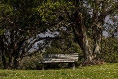 Drewniana parkowa ławka pod drzewami Obrazy Royalty Free