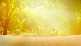 Drewniana podłoga, ranku światło słoneczne w parkowym lecie, wibrującym Fotografia Stock