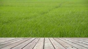 Drewniana podłoga z krajobrazem ryż podkrada się kiwanie zbiory
