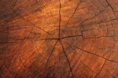 Drewniana przekrój poprzeczny tekstura Fotografia Royalty Free