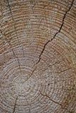 drewniana rżnięta tekstura Zdjęcie Royalty Free
