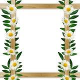 Drewniana rama z liśćmi i stokrotkami Obraz Royalty Free