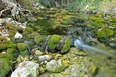 Drewniana rzeka w lecie Obrazy Stock