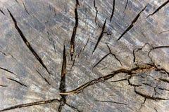 Drewniana sekcja stary drzewa cięcie z zobaczył makro- fotografia stock