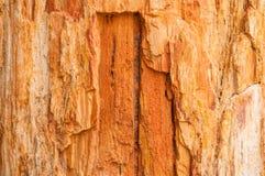Drewniana skamieliny powierzchni tekstura Obraz Stock