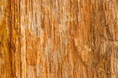 Drewniana skamieliny powierzchni tekstura Obraz Royalty Free