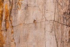 Drewniana skamieliny powierzchni tekstura Zdjęcia Royalty Free