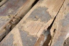 Drewniana stajni deski wydrążenia szkoda od pluskw zdjęcie stock