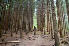 Drewniana statua w lasowym na otwartym powietrzu muzeum w Vydrovo Fotografia Stock