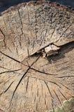 Drewniana struktura Zdjęcia Stock