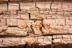 Drewniana struktura zdjęcie royalty free