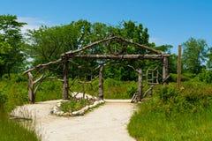 Drewniana struktura fotografia royalty free