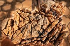 Drewniana sztuka robi? op?ata t?skni? ujawnienie w r??nej pogodzie z natury zdjęcia royalty free