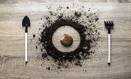 Drewniana tła pojęcia ziemia wypiętrzał okręgu dyska świntucha rozwidlenia rydla tekstury flancowania centrum oatmeal ciastka zbo Fotografia Stock