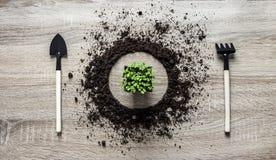 Drewniana tła pojęcia ziemia wypiętrzał okręgu naczynia paddle rozwidlenia świntucha tekstury flancowania kwiatu zieleni sałatki  zdjęcie royalty free