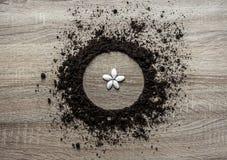 Drewniana tła pojęcia ziemia wypiętrzał okręgu naczynia tekstury lądowania centrum ziarna gdy kwiatów płatków wiosna horyzontalna Fotografia Stock
