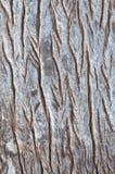 Drewniana tekstura. zdjęcie stock