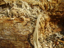 Drewniana tekstura Zdjęcie Royalty Free