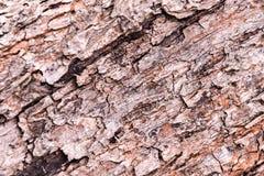 Drewniana tekstura, Abstrakcjonistyczny tło Obraz Stock