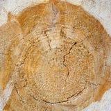 Drewniana tekstura cutted drzewny bagażnik Obrazy Stock