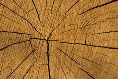 Drewniana tekstura Cutted drzewo Obrazy Royalty Free