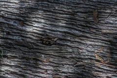 Drewniana tekstura i cienie Zdjęcia Royalty Free