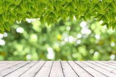 Drewniana tekstura i naturalny zielony tło Fotografia Royalty Free