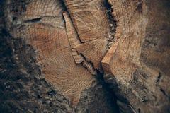 Drewniana tekstura i tło Rżnięta drzewnego bagażnika tekstura Makro- widok rżnięta drzewnego bagażnika tekstura i tło Fotografia Stock
