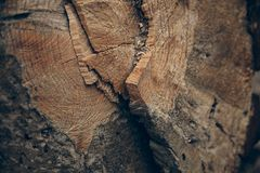 Drewniana tekstura i tło Rżnięta drzewnego bagażnika tekstura Makro- widok rżnięta drzewnego bagażnika tekstura i tło Obraz Royalty Free