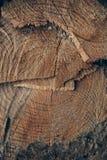 Drewniana tekstura i tło Rżnięta drzewnego bagażnika tekstura Makro- widok rżnięta drzewnego bagażnika tekstura i tło Zdjęcia Royalty Free
