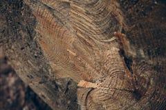 Drewniana tekstura i tło Rżnięta drzewnego bagażnika tekstura Makro- widok rżnięta drzewnego bagażnika tekstura i tło Zdjęcie Royalty Free