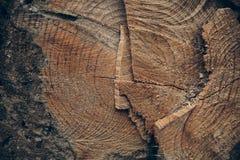 Drewniana tekstura i tło Rżnięta drzewnego bagażnika tekstura Makro- widok rżnięta drzewnego bagażnika tekstura i tło Obrazy Royalty Free