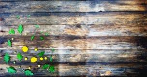 Drewniana tekstura Na górze jesień kwiatów Zdjęcia Royalty Free