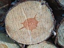 Drewniana tekstura rżnięty drzewny bagażnik zdjęcia stock