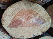 Drewniana tekstura rżnięty drzewny bagażnik obrazy royalty free