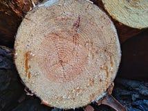 Drewniana tekstura rżnięty drzewny bagażnik zdjęcie royalty free