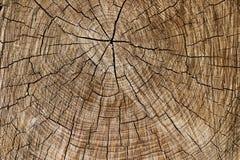 Drewniana tekstura rżnięty drzewny bagażnik, zakończenie zdjęcie stock