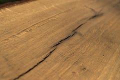 Drewniana tekstura Rżnięty drzewo Zdjęcie Stock